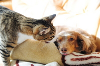 Dogs and cats Stock photo [3690218] Dogs