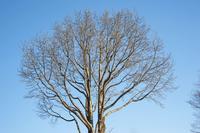 Large tree Stock photo [3690367] Tree