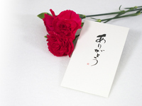 Red carnation and card of Mother's Day Stock photo [3698936] Carnation