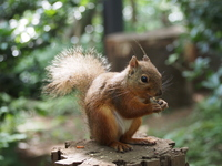 Nihonrisu Stock photo [3808008] Squirrel