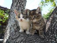 Brother of kitten Stock photo [3809449] Kitten