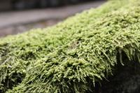 這苔 Stock photo [3999401] Moss