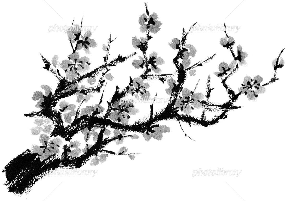 梅の木紅梅モノクロ イラスト素材 4095228 フォトライブ
