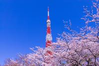 Tokyo Tower and Sakura Stock photo [4090706] Tokyo
