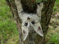 Cat climb a tree Stock photo [4207075] Tree