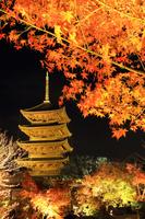 December Kyoto Toji five-story pagoda light up autumn leaves stock photo