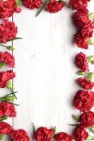 Red carnation of the frame white wood background Stock photo [4310558] Carnation