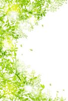 Light and green leaf postcard size [4316228] Postcard