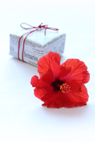 Bright red hibiscus and the gift and the Heart Stock photo [4402265] hibiscus