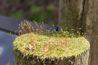 Moss that grew on the stump of Aoike Stock photo [4402450] Aoike
