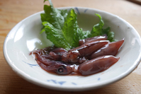 Squid off the coast of pickled Stock photo [4478955] Firefly