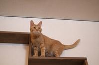 Cat on the shelf Stock photo [4482357] Cat