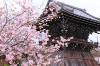 Bell tower before the cherry blossoms Stock photo [4484589] Temple
