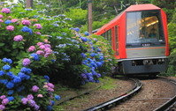 Hakone Tozan and hydrangea Stock photo [4561099] Hakone