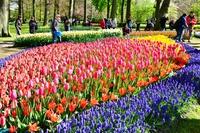 Keukenhof Gardens Stock photo [4563958] Netherlands