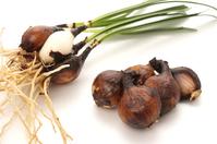 Amaryllis bulb white back Stock photo [4689420] Root