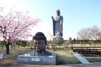 1 model of Ushiku Buddha front is 1000 minutes Stock photo [4693834] Ushiku