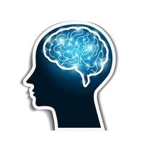 The human brain [4694059] Human