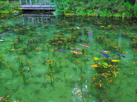 Pond of Seki Monet Stock photo [4753866] Gifu