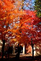 徳富蘇峰記念館前の紅葉