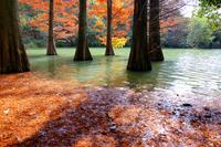 Forest Sasaguri Kyushu University of autumn Stock photo [4758150] Fukuoka