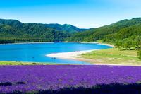 Lavender fields and lake Kanayamako Minamifurano Stock photo [4842612] lavender