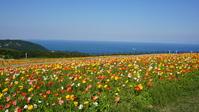 Awaji flower gallery Stock photo [4847095] Awaji
