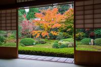 Autumnal leaves of Kyoto Sennyū-ji Unryū-in Stock photo [4848117] Japanese