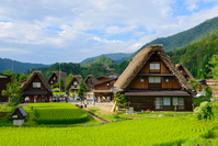 Village of Shirakawa-go, Gifu summer of Ogimachi joining one's hands in prayer making Stock photo [4950380] Shirakawa-go