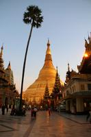 夕暮れのミャンマーのシュエダゴン・パゴダと木
