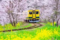 Isumi railway of spring Stock photo [4955413] Local