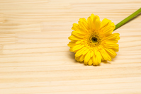 Gerbera yellow Stock photo [5048707] Father's