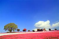 Shiba and blue sky Stock photo [5051821] Hachioji