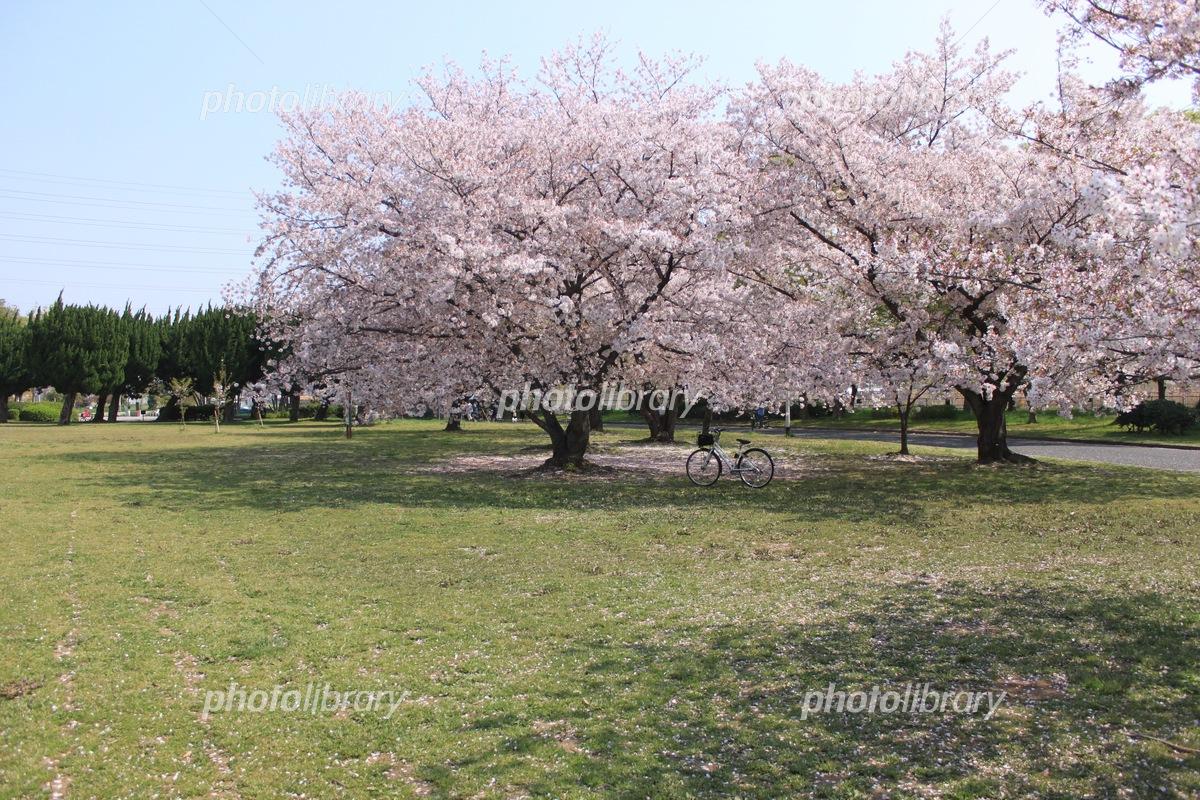 公園 大泉 緑地