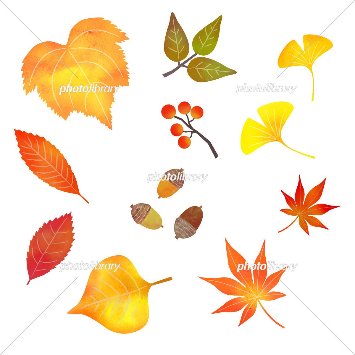 秋の葉っぱ イラスト素材 5236665 フォトライブラリー Photolibrary