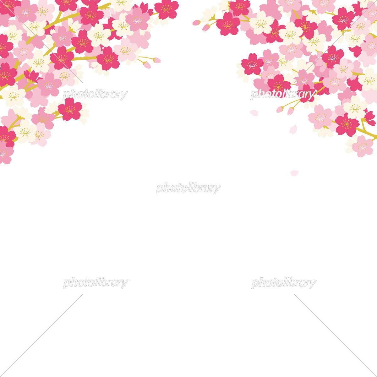 桜 背景イラスト イラスト素材 [ 5329530 ] - フォトライブラリー