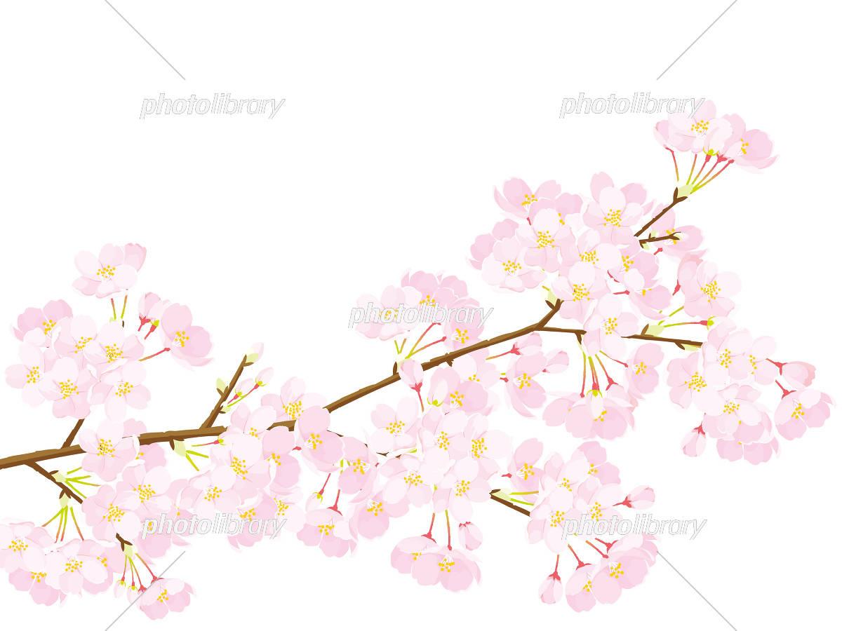 桜 イラスト イラスト素材 5334545 フォトライブラリー Photolibrary
