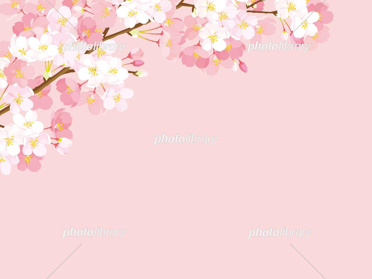 桜 背景イラスト イラスト素材 [ 5334550 ] - フォトライブラリー