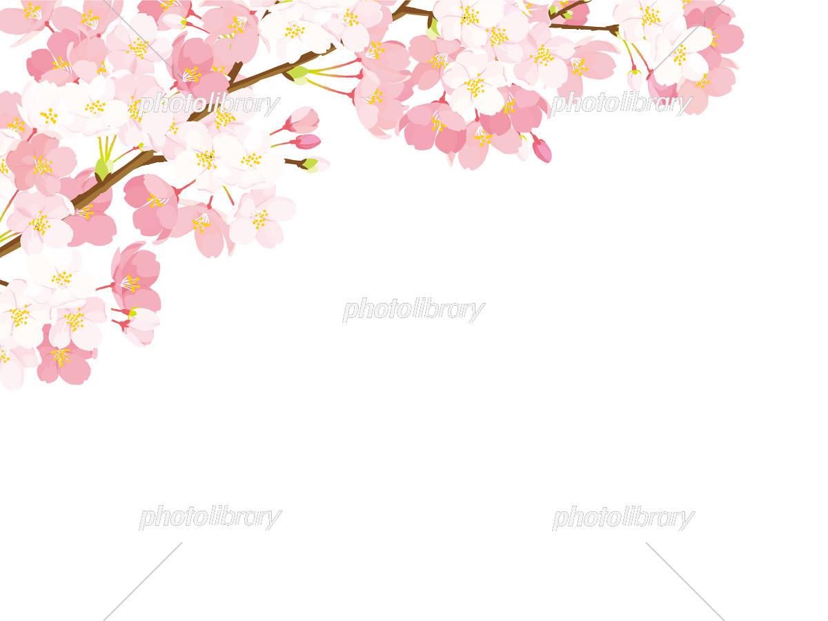 桜 背景イラスト イラスト素材 [ 5334551 ] - フォトライブラリー