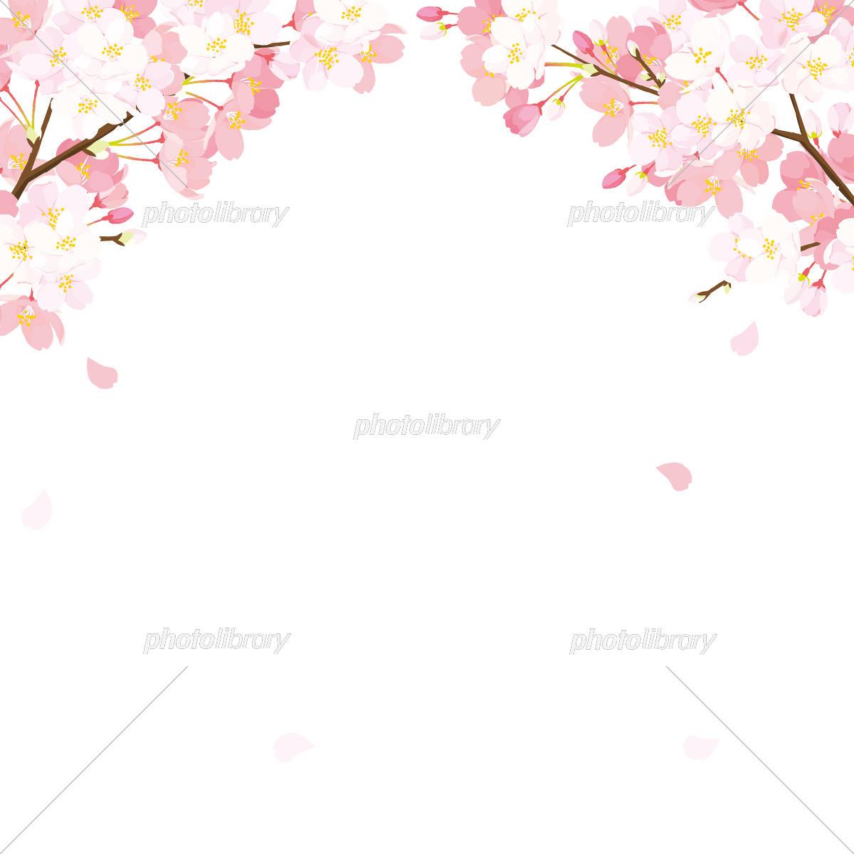 桜 背景イラスト イラスト素材 [ 5334555 ] - フォトライブラリー