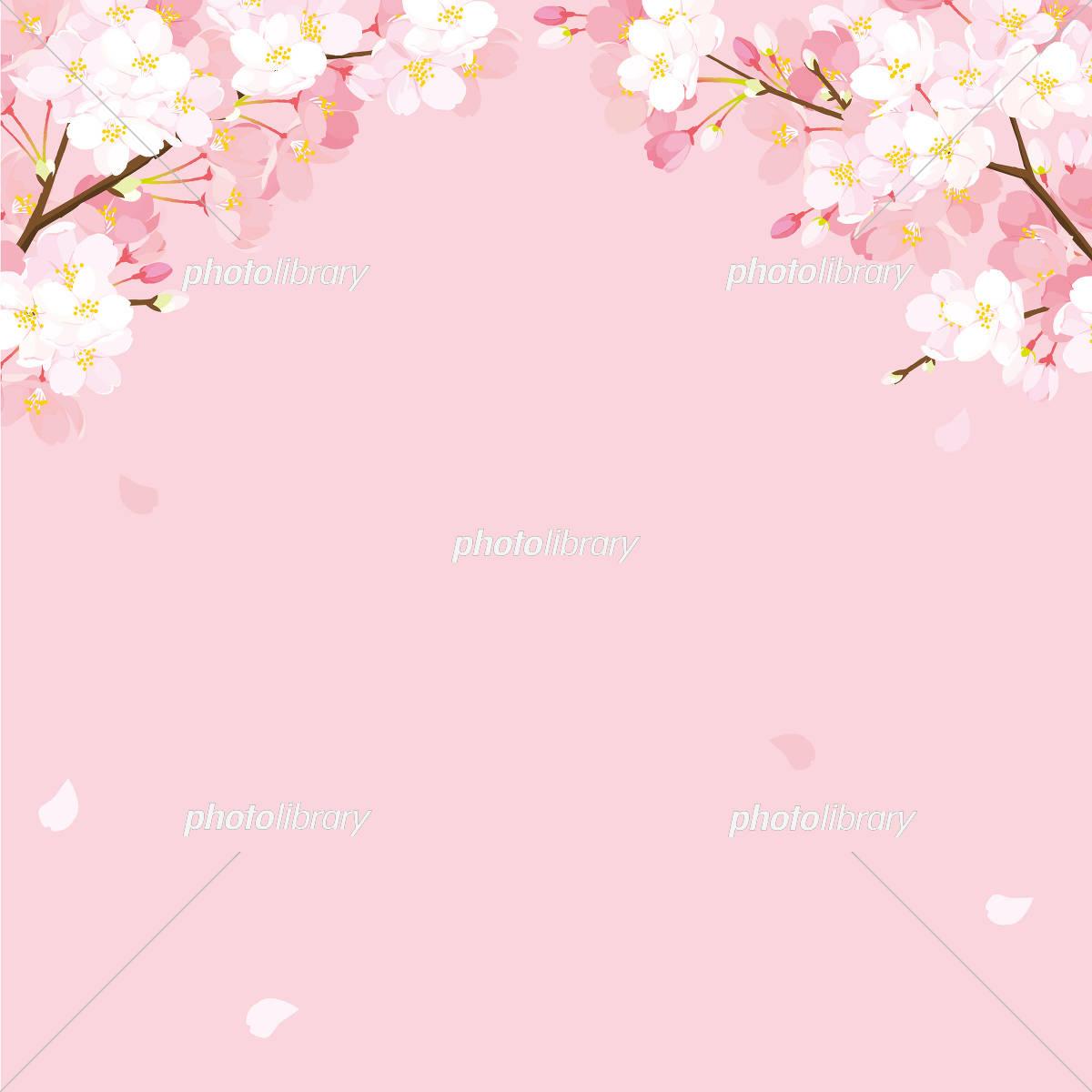 桜 背景イラスト イラスト素材 [ 5334557 ] - フォトライブラリー