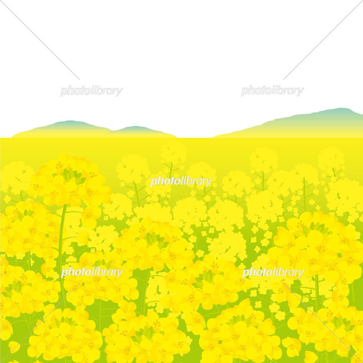 菜の花畑 背景イラスト イラスト素材 5399783 フォト