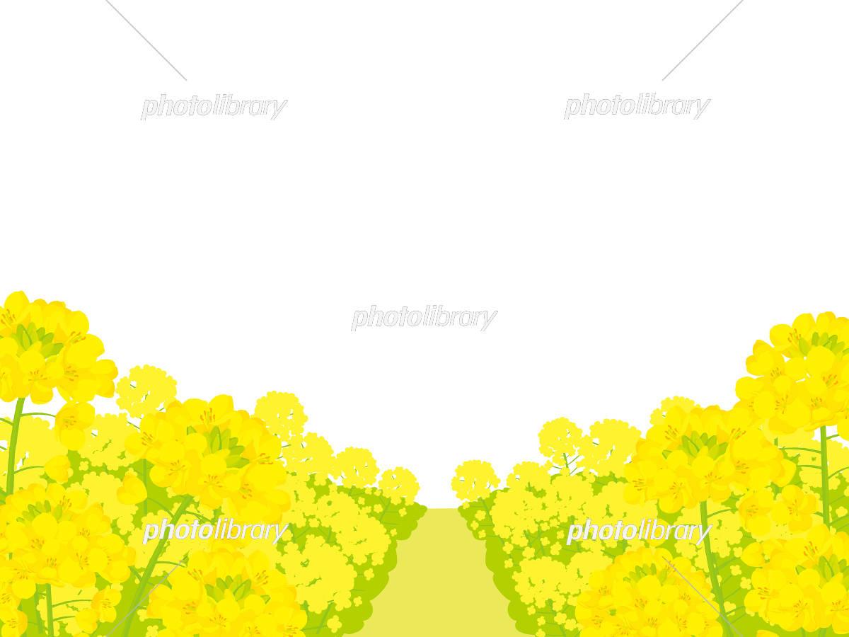 菜の花畑 背景イラスト イラスト素材 5399788 フォト