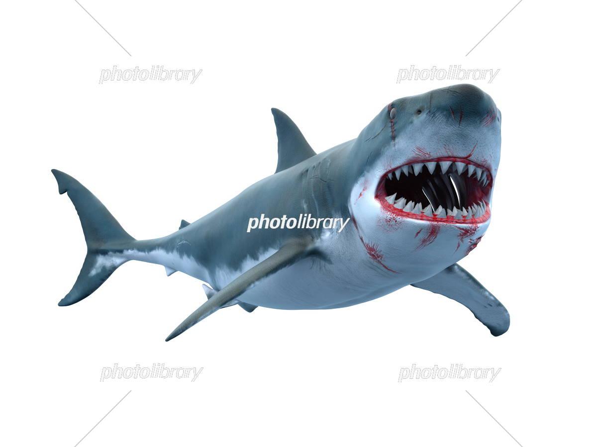 サメのイラストcg イラスト素材 5400044 フォトライブラリー