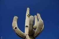 Cactus Stock photo [188044] America