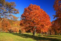 Sasagamine plateau of autumn Stock photo [228955] Niigata