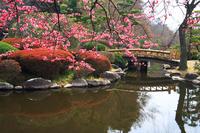 Kairakuen garden Stock photo [231583] Ibaraki