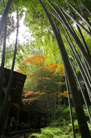 Bamboo forest Stock photo [277024] Bamboo