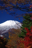 Autumn leaves and Mount Fuji Stock photo [656860] Mt.