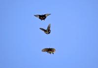 Agehacyou Stock photo [660851] Papilio